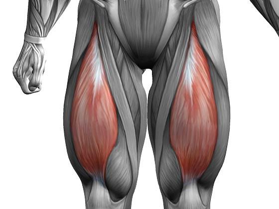 Прямая мышца бедра