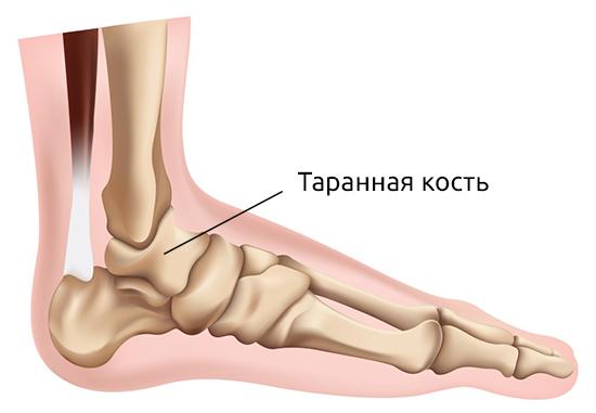 Таранная кость