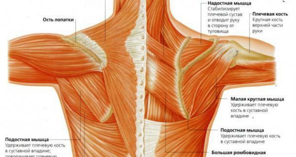 Плечевого сустава отведение как лечить коленные суставы в домашних условиях видео