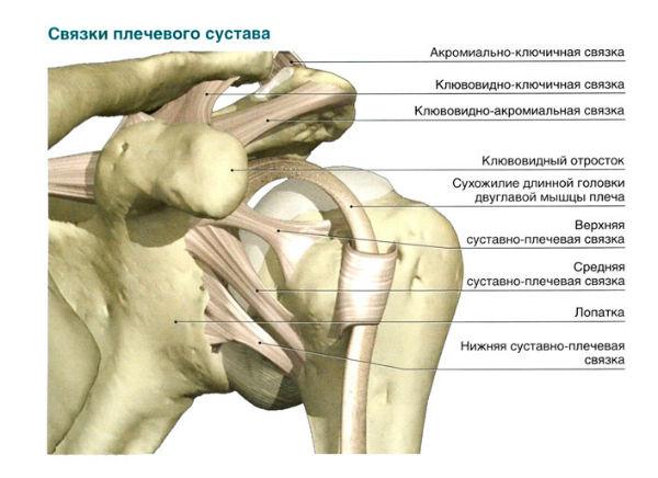 Лопатка сочленяется с рёбрами образуя суставы незрелость сустава у новорожденного